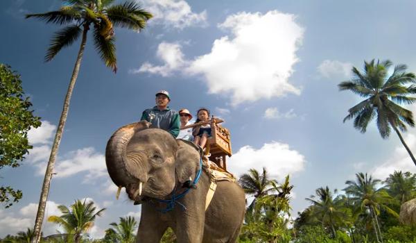 Сафари на слоне
