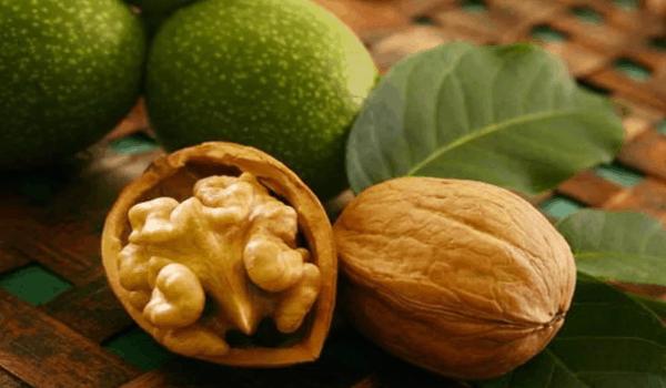 Польза грецких орехов и перегородок